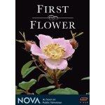 first-flower1