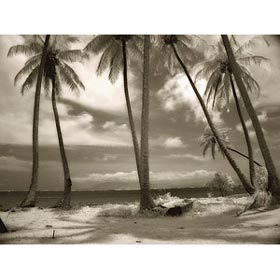 kcarr palms