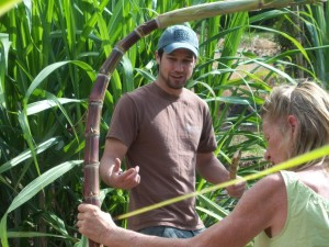 Hawaiian Canoe Plant Tours